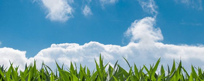 Agriculture precision for corn fields UAVs Delair-Tech