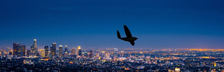Delair-Tech launches its US subsidiary at Los Angeles, South
