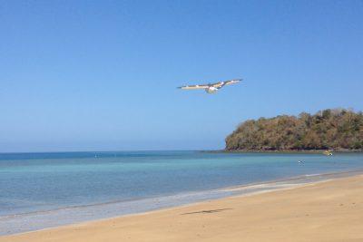 Dt26X UAV flying over the see for multispectral inspection