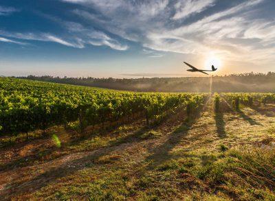 Delair DT18 UAV For Agriculture Agriculture Forestries